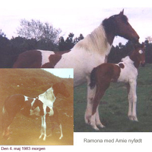 Ramona and her newborn foal Amie, click the photo