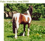 Click for more photos of Irish Boy